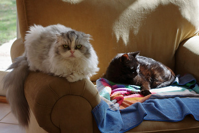 Puffy and Squirt share a chair in the sun room.
