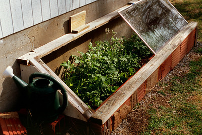 Cold frame for growing winter greens - here arugula. (Fuji RVP 100F)