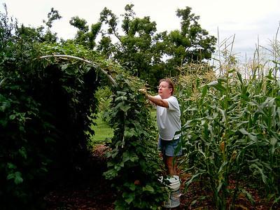 Rita picking beans. Garden, 7/07