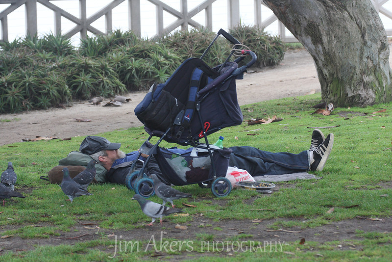 Palisades Park, Santa Monica, CA<br /> <br /> Citizen exercising 1st amendment right to assemble