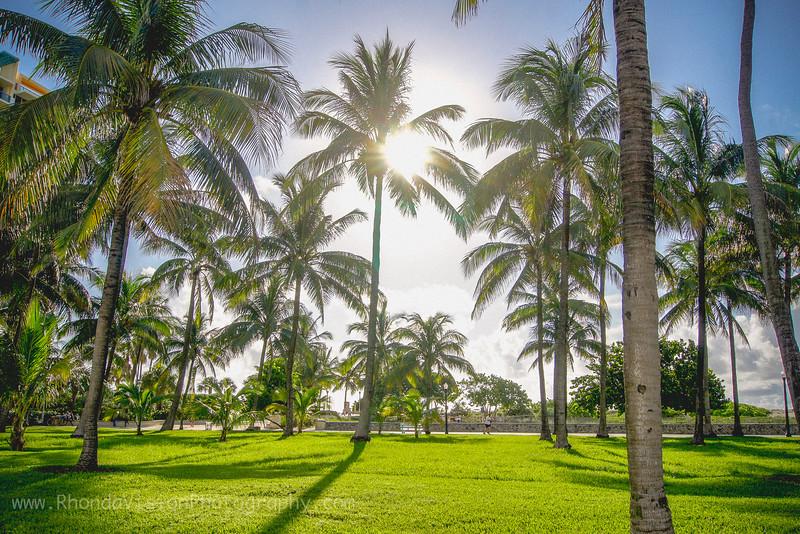 Good Morning, South Beach, Miami, FL