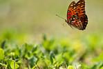NA1_8064_Nathan Adams_Pelican Island Wildlife_Nathan Adams
