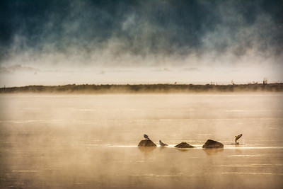Morning Fog on the Susquehanna River