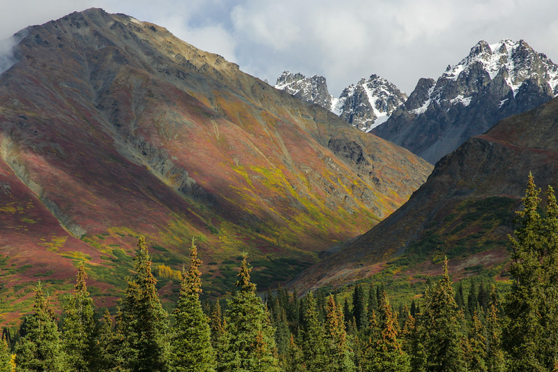 Fall colors in the Alaska Range