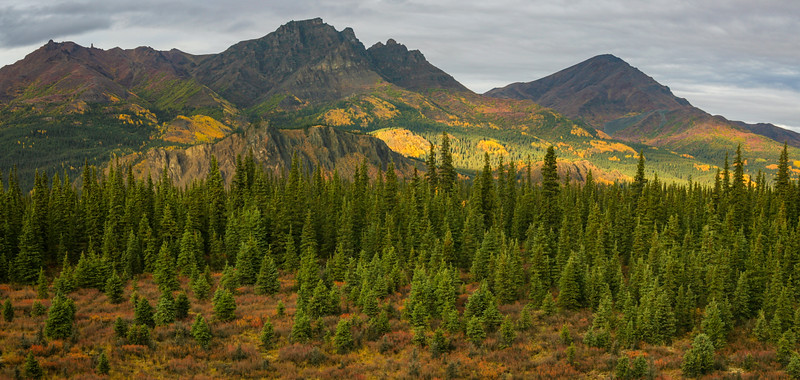 The onset of fall turns the Alaska Range adjacent to Denali NP into a kaleidoscope of colors.