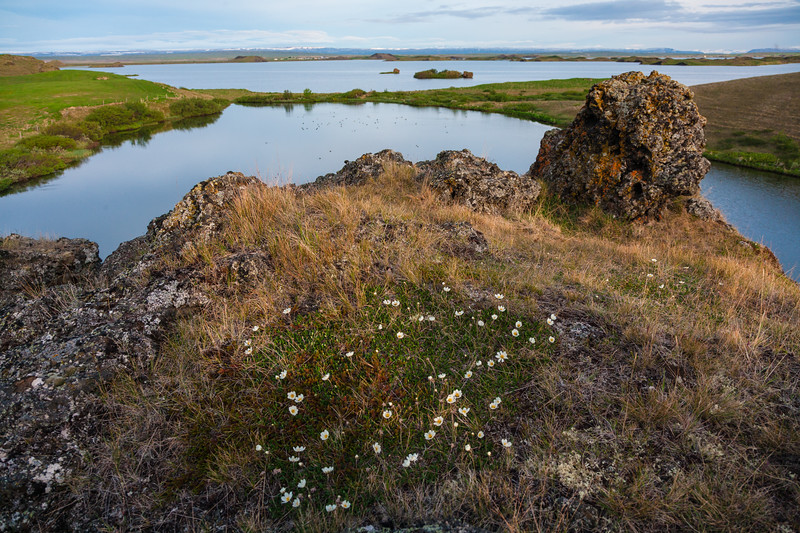 View of Lake Myvatn in northern Iceland.