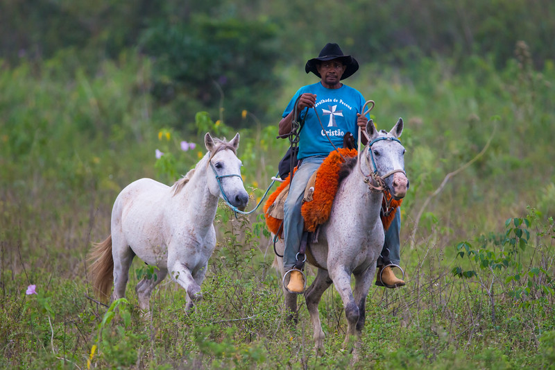South America. Brazil. A Pantanero, a Brazilian cowboy, leads his spare horse to the barn in the Pantanal, the world's largest tropical wetland area, and a UNESCO World Heritage Site.