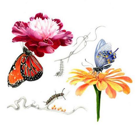 © <b>Jane Dowling</b> - Butterfly and Peony