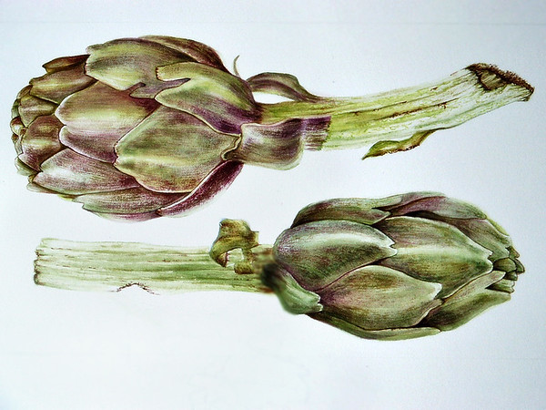 © <b>Paula Tobenfeld</b> - Two Artichokes