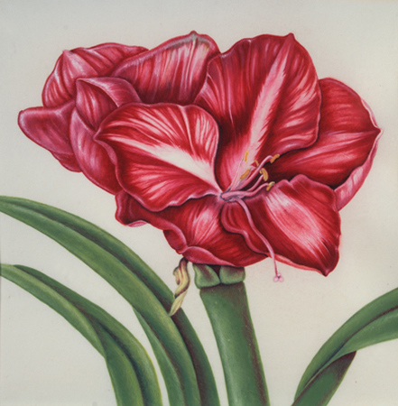 © <b>Anne Feldman</b> - Red Amaryllis<br>annefeldmanart.com