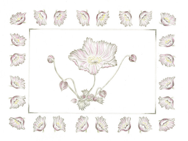 © <b>Elizabeth Whiteley</b> - Windflower (<i>Anenome vitifolia</i>)