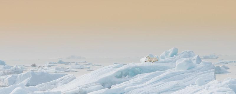 Jääkarhu Patrick ja Operaatio Tassunjälki