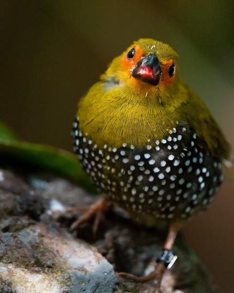 Florida Birds 2014
