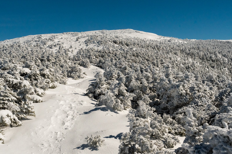 Approaching the North Peak of Moosilauke, with deep snow raising the trail above the trees.