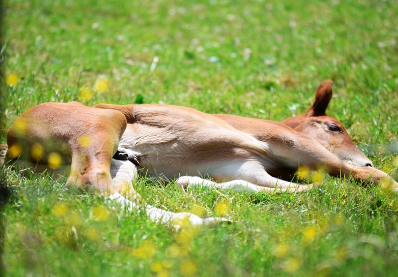 foal shoot 001
