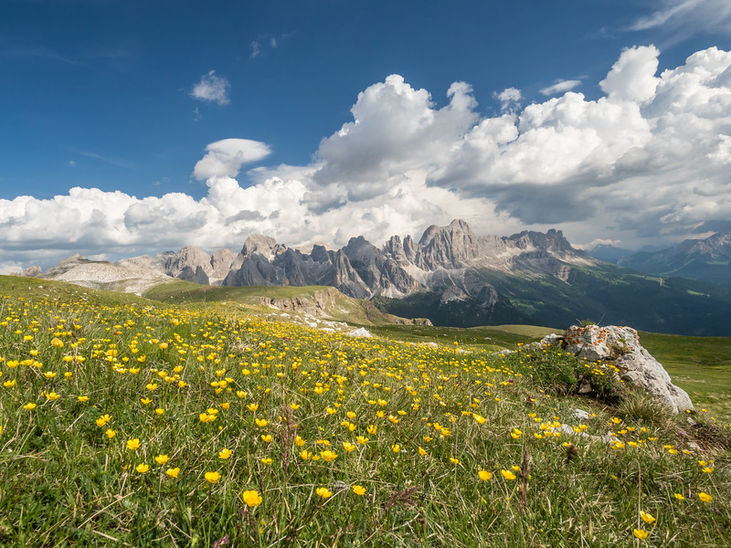 Wildflowers and the Rosengarten, South Tyrol, Italy