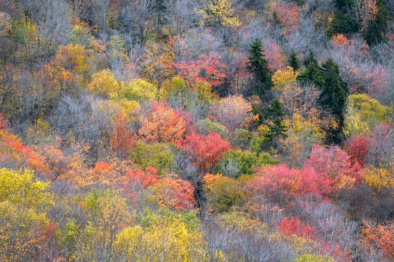 Dappled Colors