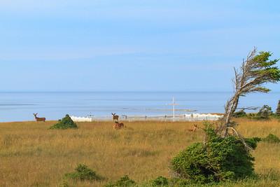 Le cimetière de Baie-Sainte-Claire et ses visiteurs...