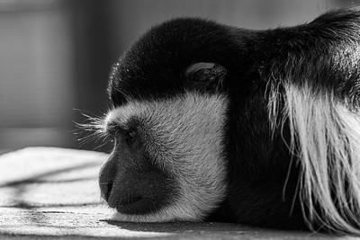 Howletts Animal Park