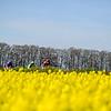 The Portman Hunt Point-to-Point Races, BADBURY RINGS, BLANDFORD FORUM, DORSET, ENGLAND