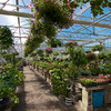 Greenhouse Int Landscape