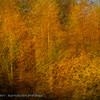 Herfstlandschap; ChampagneArdennes; Hautvillers; France; autumn colors; couleurs automnales; herfstkleuren
