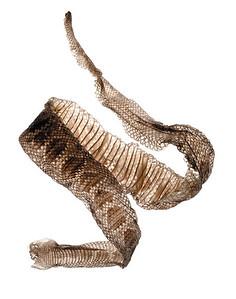 snake5, 1/29/01, 4:59 PM,  8C, 3750x5000 (0+0),  62%, better push6,  1/12, R594, G555, B931,