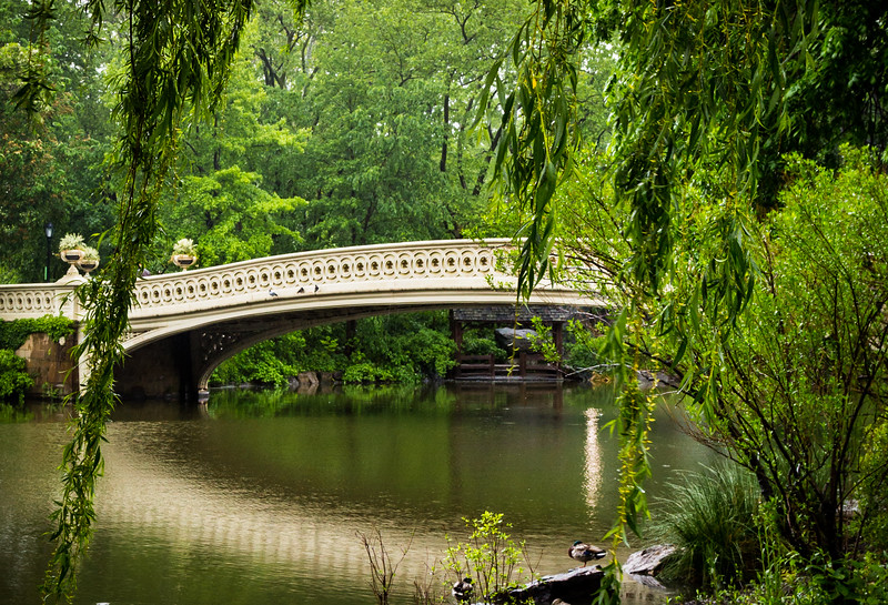 bow bridge wearing green