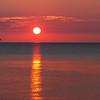 Vol de sternes et huard au soleil levant