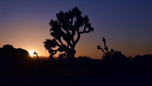 Sunset | Joshua Tree National Park