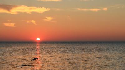 Saumon de l'Atlantique et lever de soleil, île Anticosti