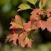 Flora; Herfst; Flora Hautvillers; Autumn colours