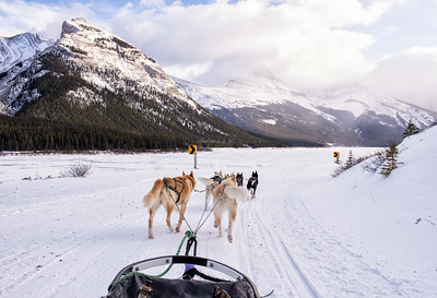 Dogsledding Perfection