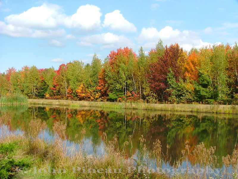 Fall Foliage - Saco, Maine<br /> FO_0001-Pic 060