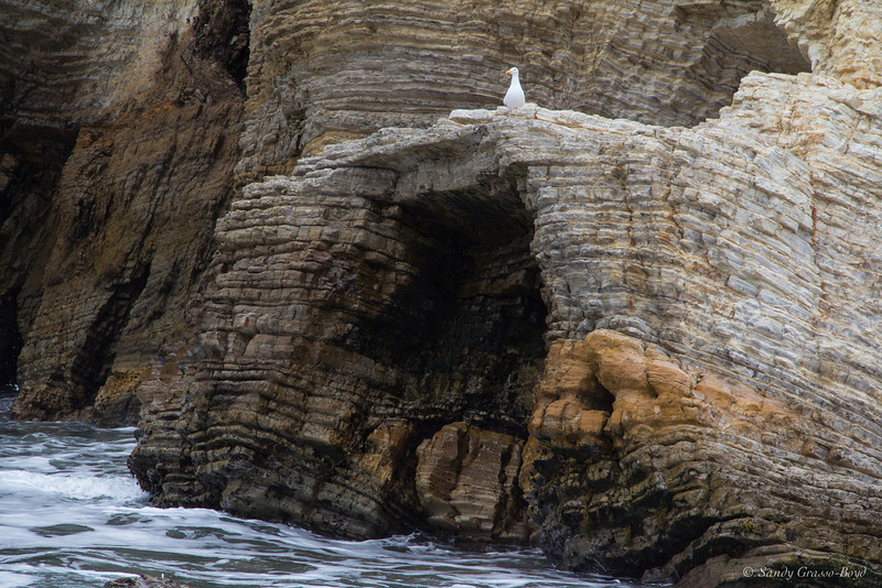 A closeup of gull and cave