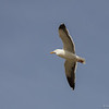 I take this photo of a sea gull passing overhead