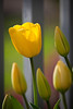 LeolaGarden-0100-110504