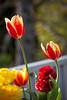 LeolaGarden-0102-110504