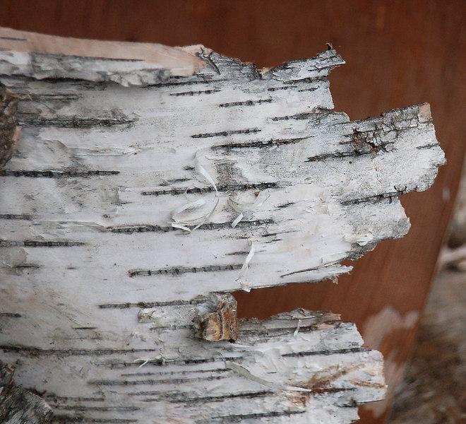 Birch Bark, Claremont, NH