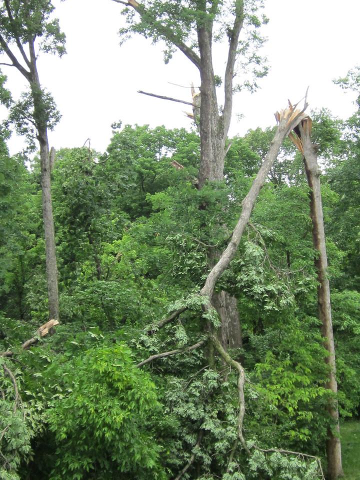 Tornado Tree Damage (Woods Behind) May 2013