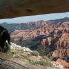 peeking down the canyon