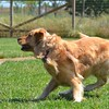 Zack is a dog enrolled in Golden Rule Training at Homeward Bound.