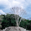 Maya temple ruins at the Copan Archaeological Park in Honduras.