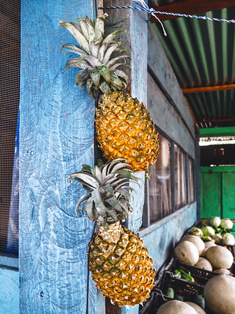 Pineapples at a fruit stand in Copan Ruinas, Honduras.