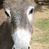 Donkey Head Shot