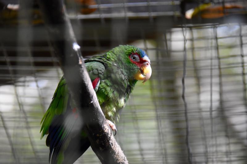Macaw Mountain, Copan, Honduras