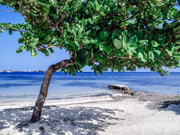 Beach in Utila Island, Honduras.