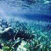 Underwater view during a snorkelling activity in Utila, Honduras.
