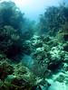 Underwater landscape.