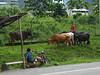 Bus stop aka cattle crossing :)